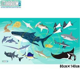 【OCEANARIUM】ドライタオル T10 green sharks identification dry towel 80cm x 140cm