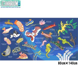 【OCEANARIUM】ドライタオル T01 Nudibranch identification dry towel 80cm x 140cm